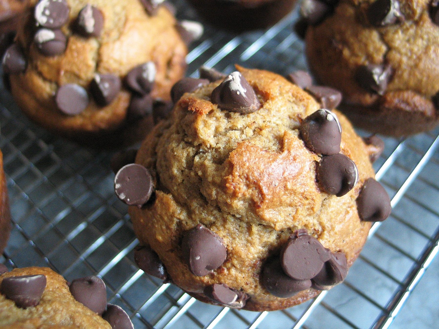 Chocolate Tahini Blender Muffins